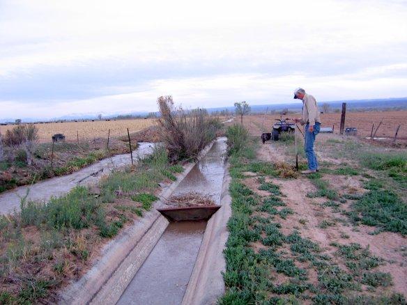 irrigation-begins-picasa.jpg