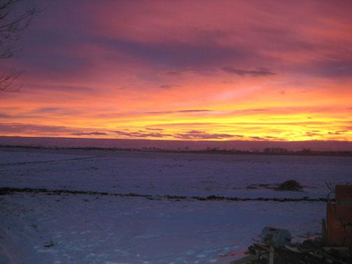 yellow-winter-sky