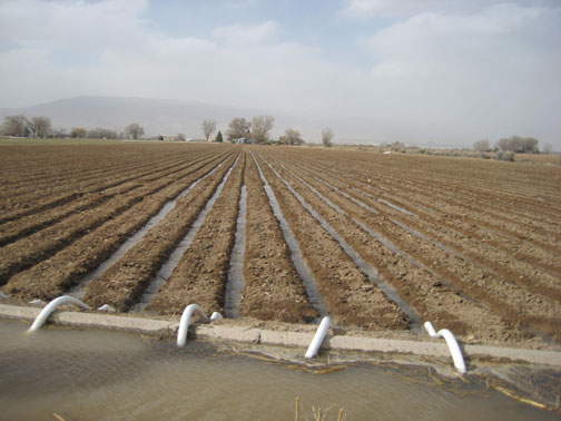 water-in-the-furrows