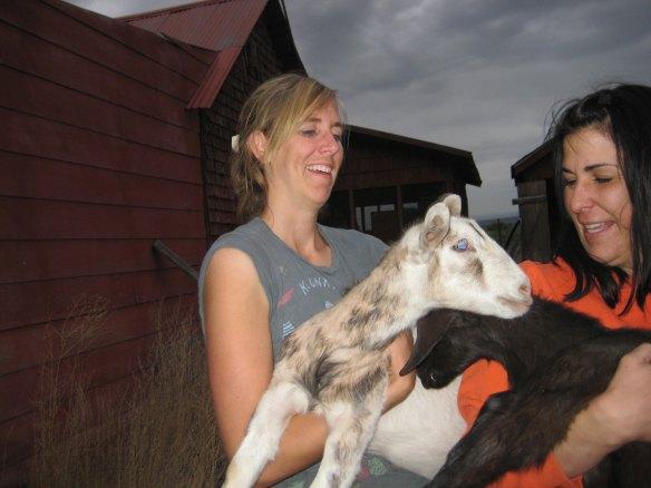 Both-Goats
