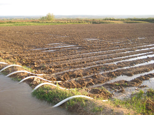 Dirt-Ditch