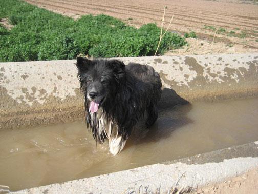 fuzzy-irrigates
