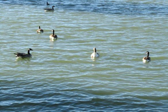 Confluence-Lake-2