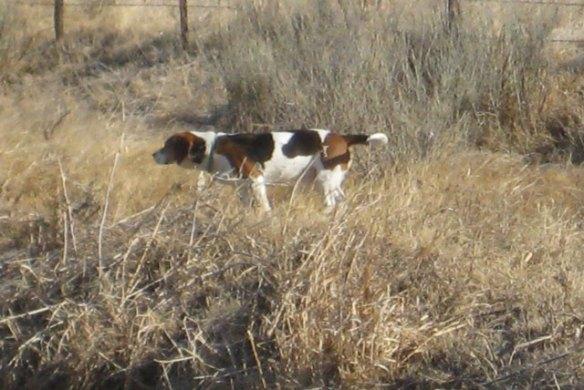Hunt'n-dog