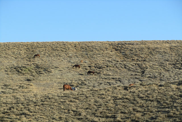 Douglas Pass, Green River, Wyoming and Wild Horses (2/6)