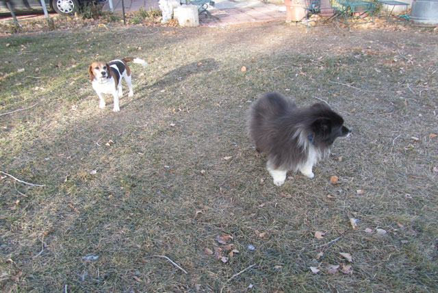 The Adventures of Fuzzy and Boomer on Friday --- Dogs in Charge (2/6)
