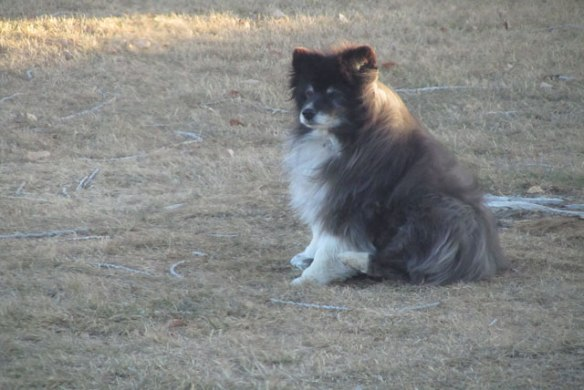 Fuzzy-with-the-wind