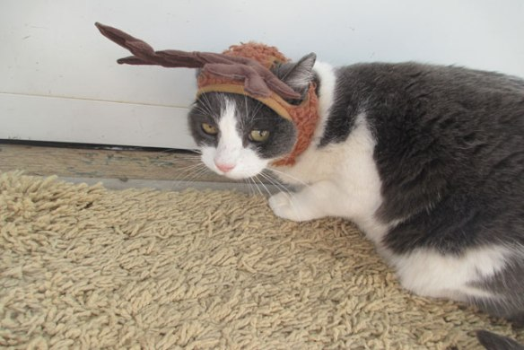 Sam-and-Antlers