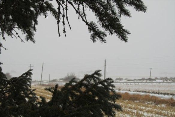 Winter-storm-1