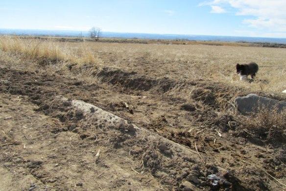 Cow-Trail