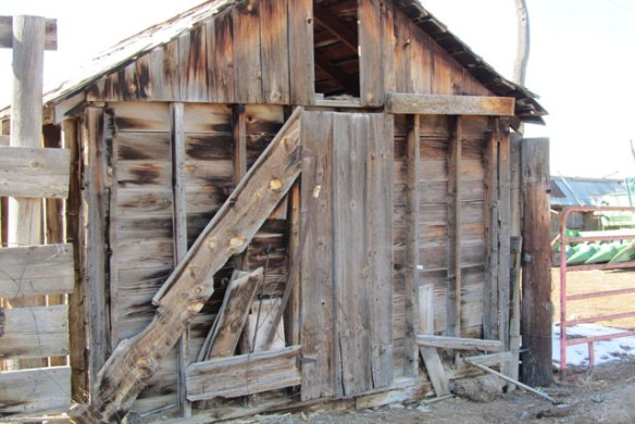 Grain-Shed-1