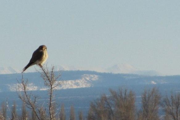 Hawk-1