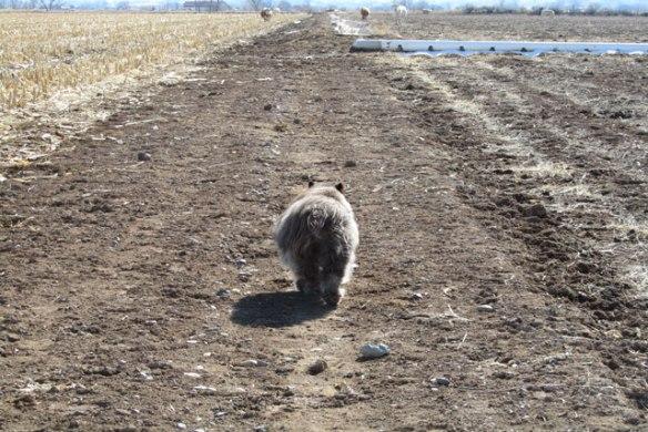 Walking-ahead