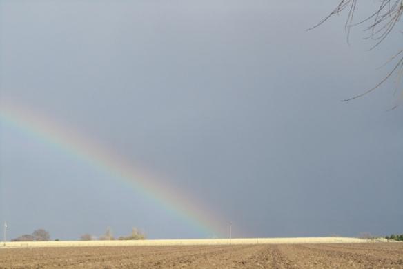 Rain-Bow-March-2013