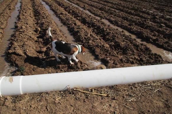 Beagle-help