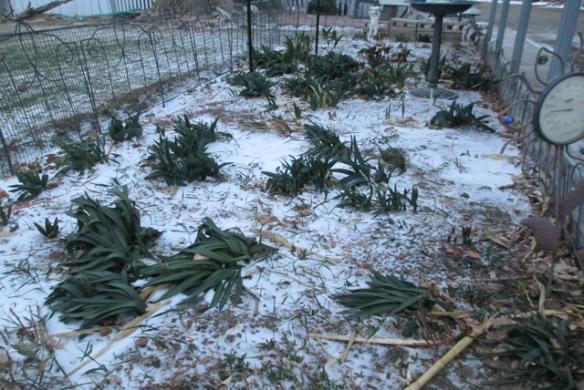My-poor-garden