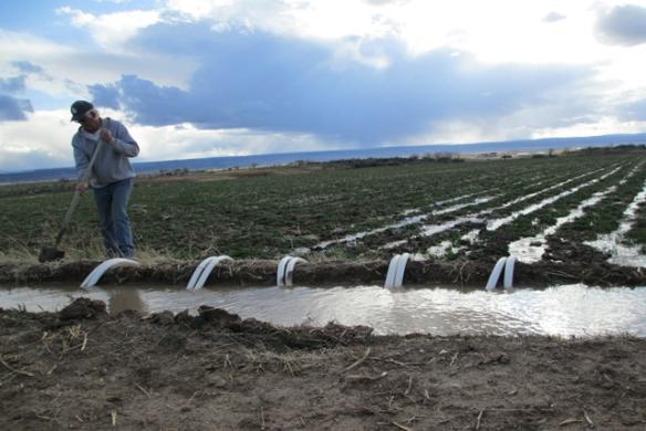 Watering-hay