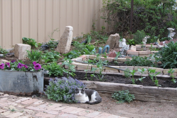 Cat-and-Plants