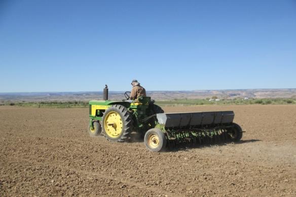 Planting-alfalfa