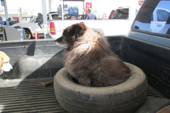 Sitting-in-the-tire