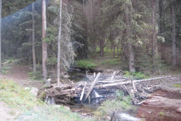 Dead-trees