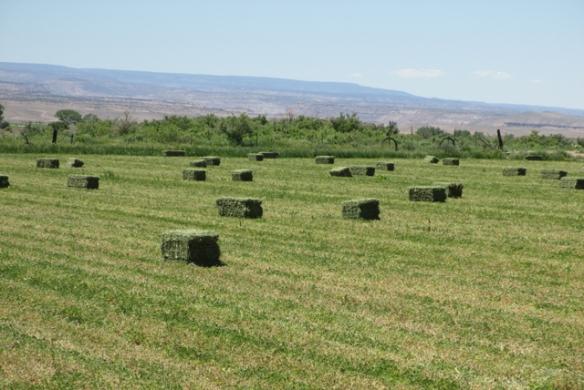 Hay-bales