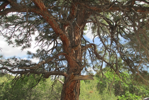 Old-tree-2