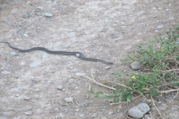 Friend-Snake