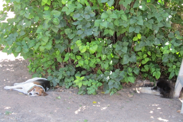 Sleeping-in-the-shade