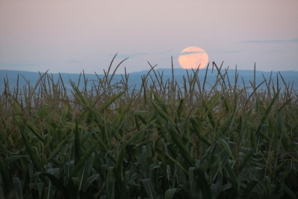 Moon-of-harvest