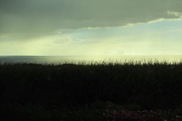Rain-5