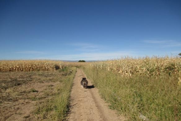 More-walk