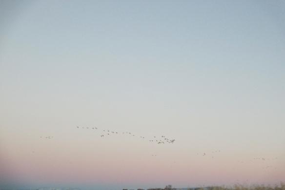 Winter-Sky2