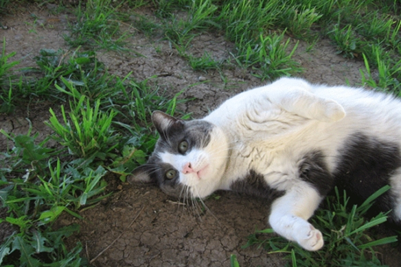 The-cat-who-loves-grass