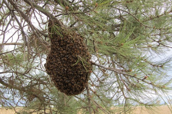 Swarm-2