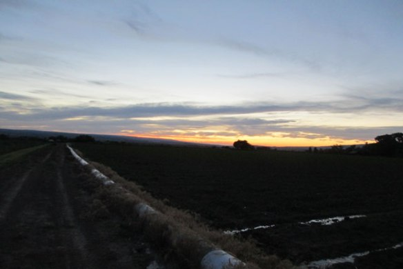 Evening-2