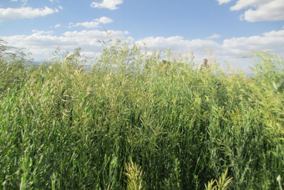 More-Grass