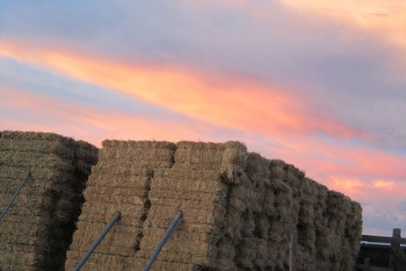 Hay-at-night