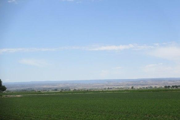 Pinto-Bean-Field