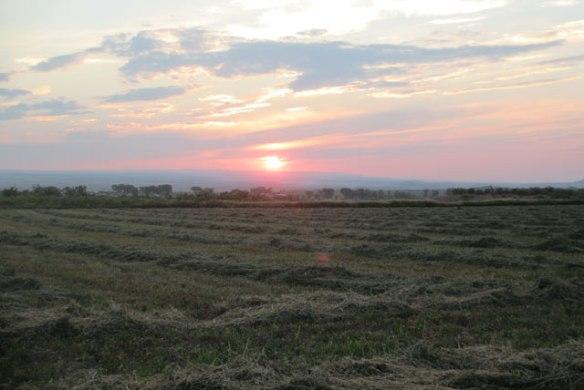Sun-on-hay