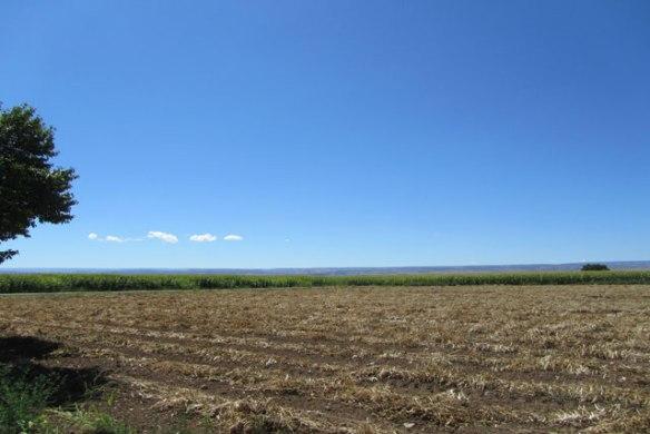 Pinto-Harvest-1-2014