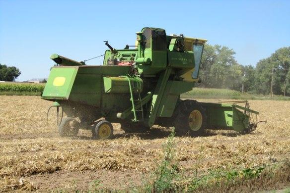 Pinto-Harvest-2014