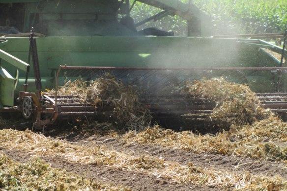 Pinto-Harvest-3-2014