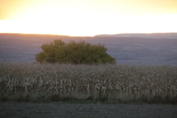 Evening-and-Corn-2