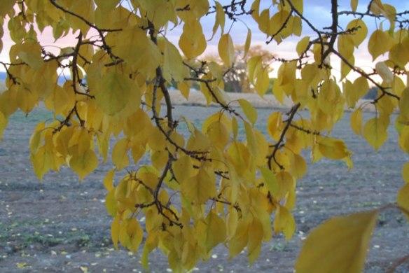 Falling-leaves-3