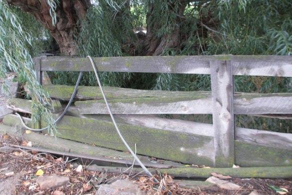 Moss-on-fence