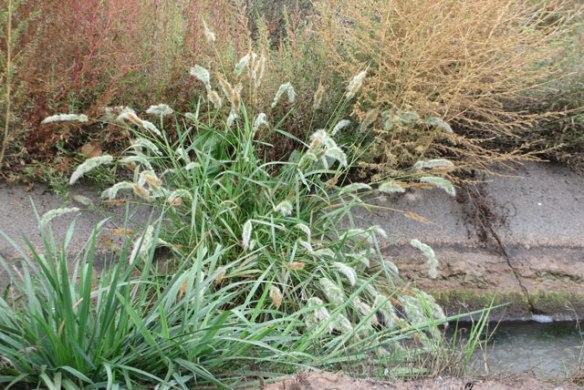 Strange-Grass