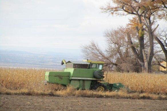 2014-Corn-Harvest-1