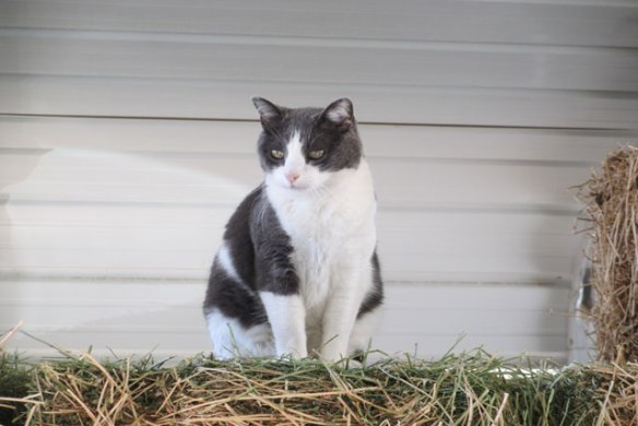 Sam-the-kitty