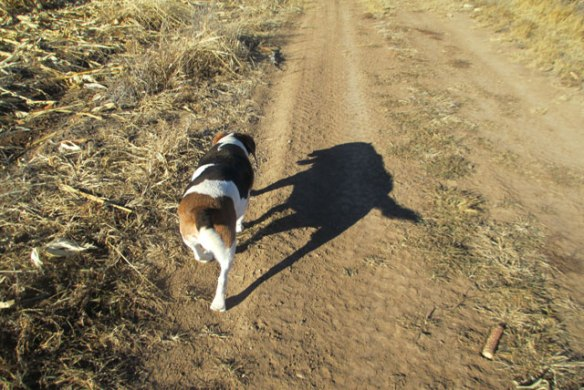 Dog-Shadow